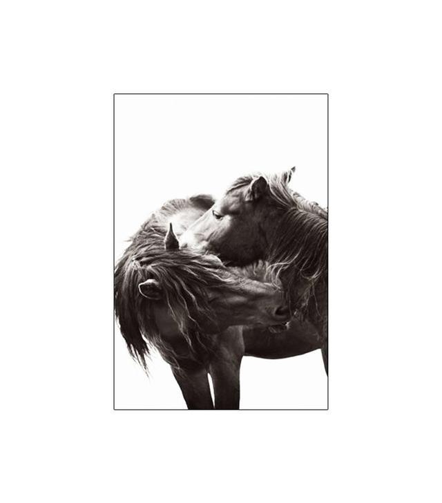 Drew Doggett Photography Kisses Wall Art