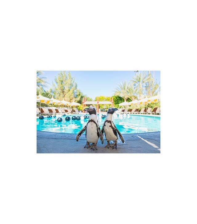 """Pool Boys"" by Gray Malin"