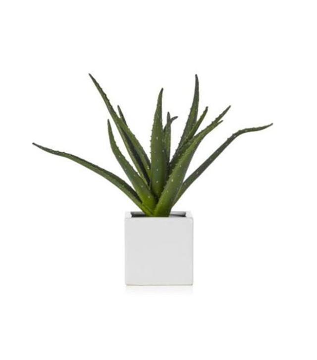 Z Gallerie Aloe Plant