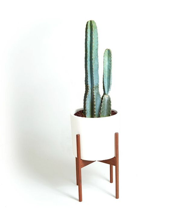 The Sill Case Study Cylinder With Cacti