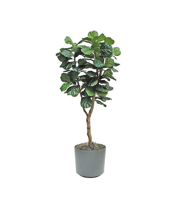 Demo Store Fiddle-Leaf Fig