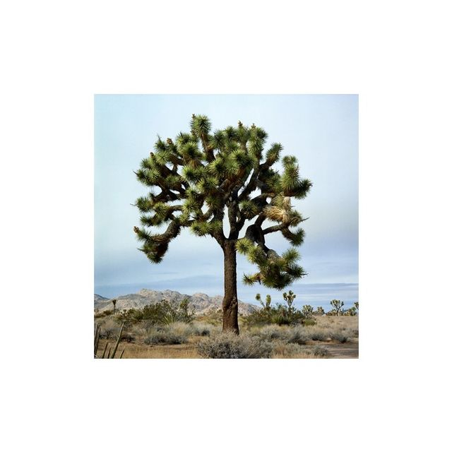 Curatorial+Co. Joshua Tree Two