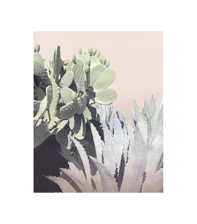 Wilder California Agave and Prickly Pear Photographic Print