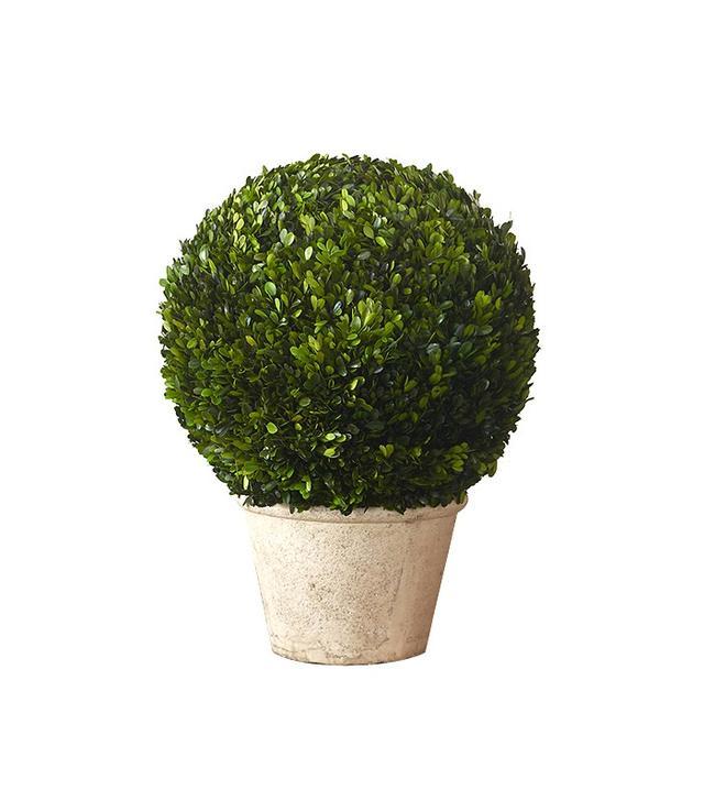 Terrain Preserved Boxwood Globe Topiary