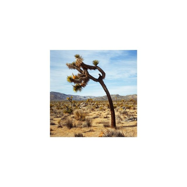 "Anita Beaney ""Joshua Tree One"""