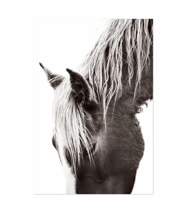 Drew Doggett Photography Whisper