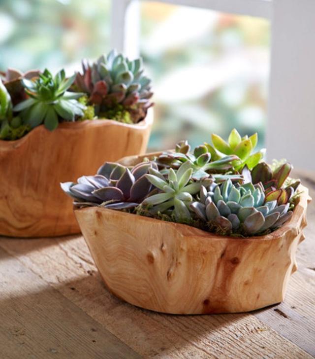 Viva Terra Succulent Garden in Root of the Earth Bowl
