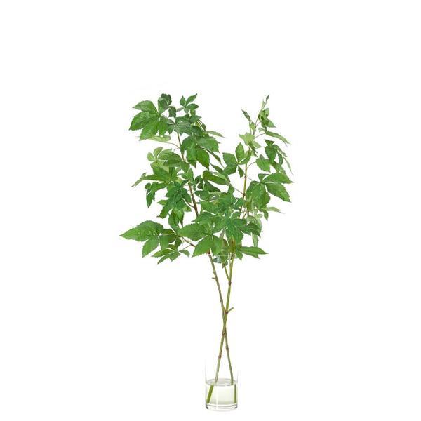 NDI Wild Grape Branch
