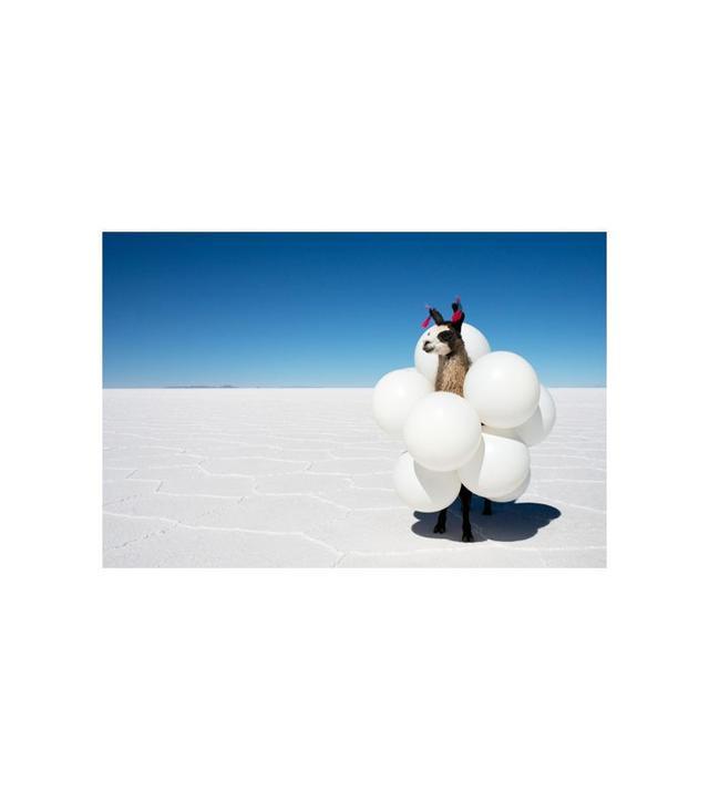 Gray Malin Llamas White Balloons