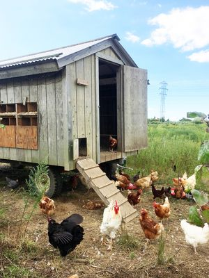 9 Chicken Coop Décor Ideas to Create an Idyllic Backyard