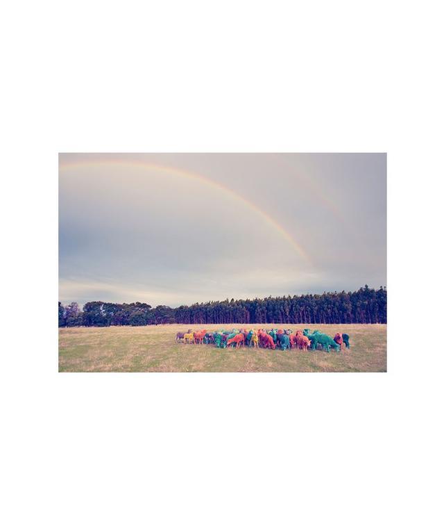 """Rainbow Sheep II"" by Gray Malin"