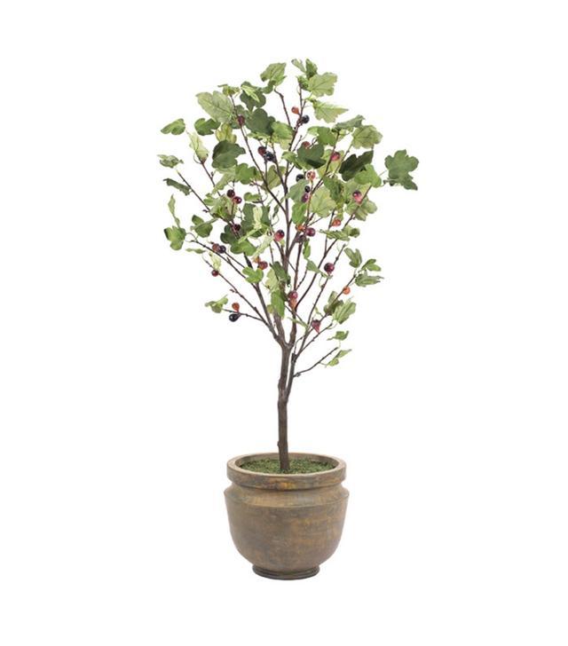 NDI Fig Tree