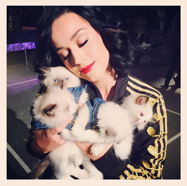 katy-perry-cats