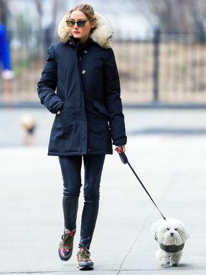 Olivia Palermo's Dog Helps Her Shop for the Holidays—Watch the Hilarious Video