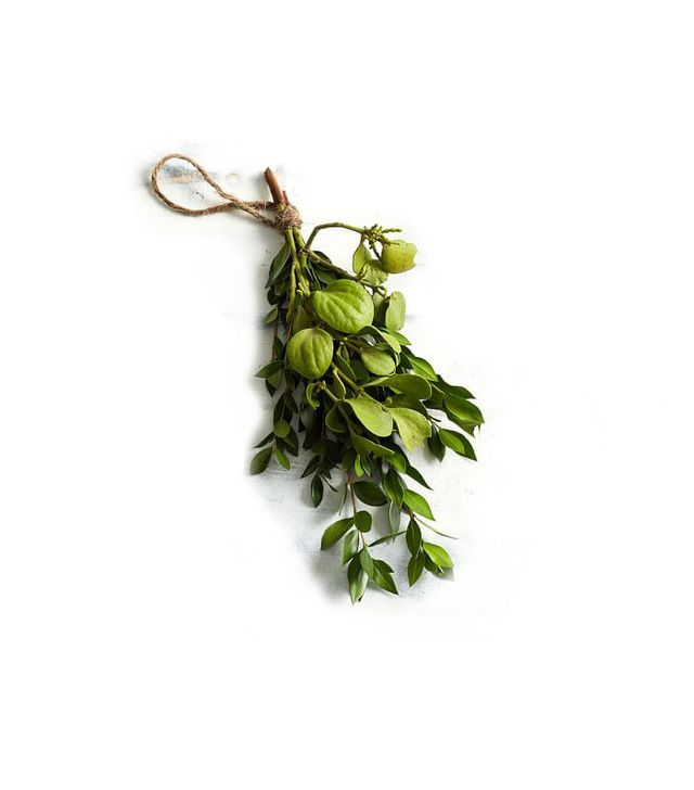 Pottery Barn Live Mistletoe Bundle With Boxwood 12x5""