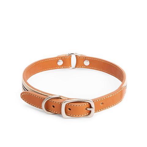 Nylon & Leather Dog Collar