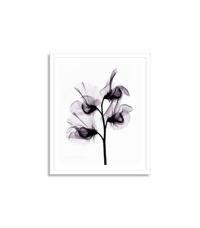 "Getty Images Bert Myers ""X-Ray of Sweet Pea Flowers"""