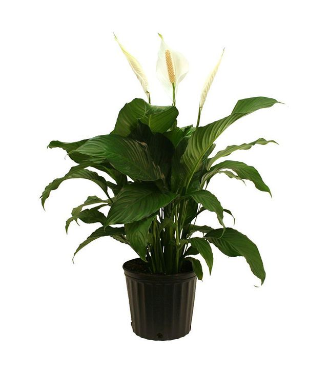 top indoor plants