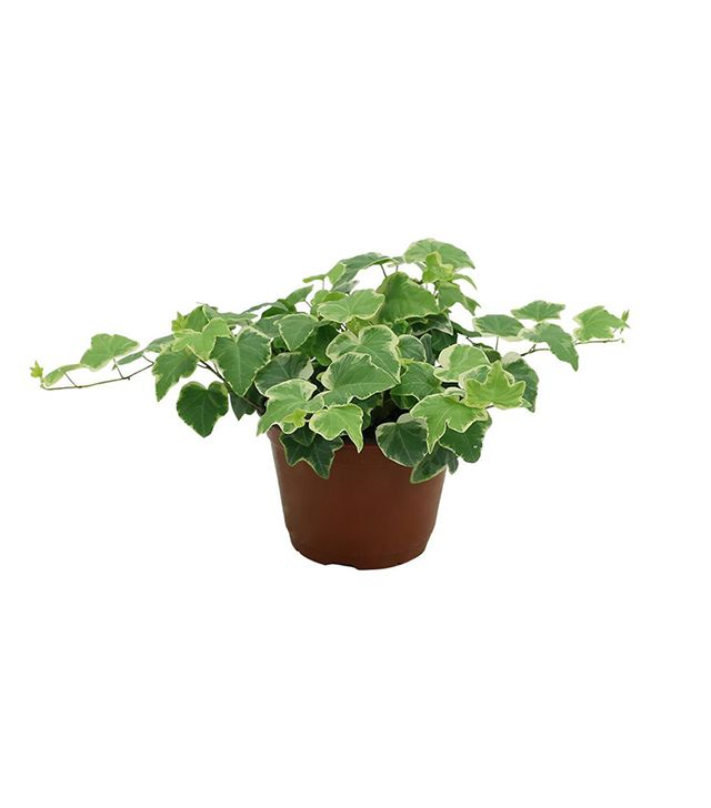 Best Small Indoor Plants Part - 41: Best Purifying Plants