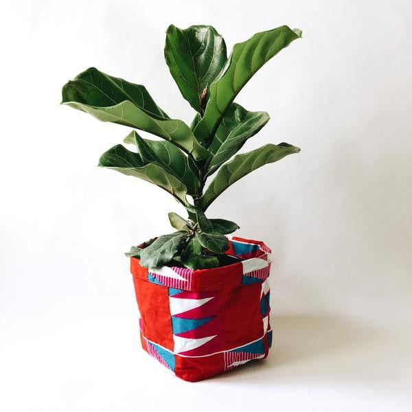 Leaf Supply Fiddle Leaf Fig with Yevu Cover