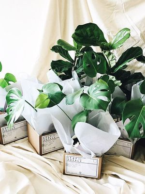 This New Delivery Service Just Proved that Foliage Is the New Flower
