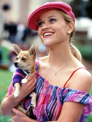 Does This Mean a Legally Blonde 3 Is Coming Soon?