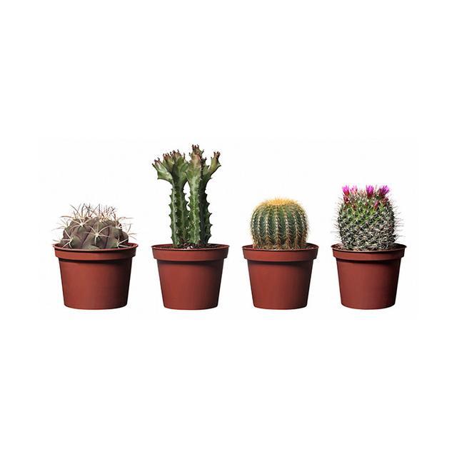 IKEA Cactaceae