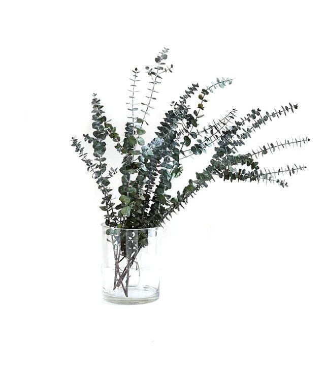West Elm Eucalyptus Bundle