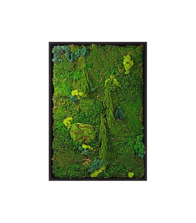 Luludi Living Art Moss Wall Garden, Black Frame