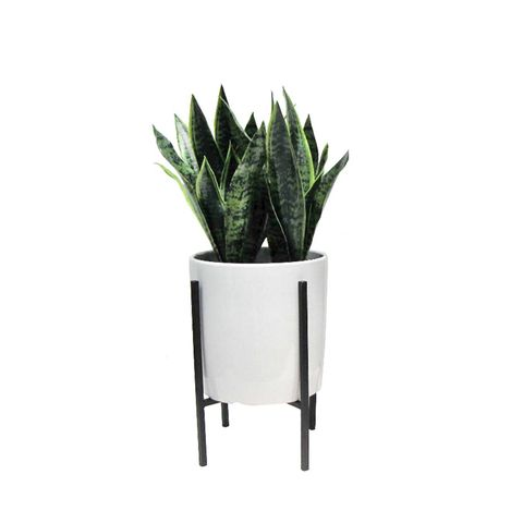 Artificial Plant in Large Stand