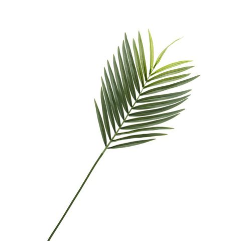 Faux Phoenix Palm Leaf