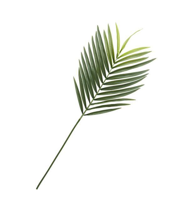 Surf Club Miami — Palm Leaf
