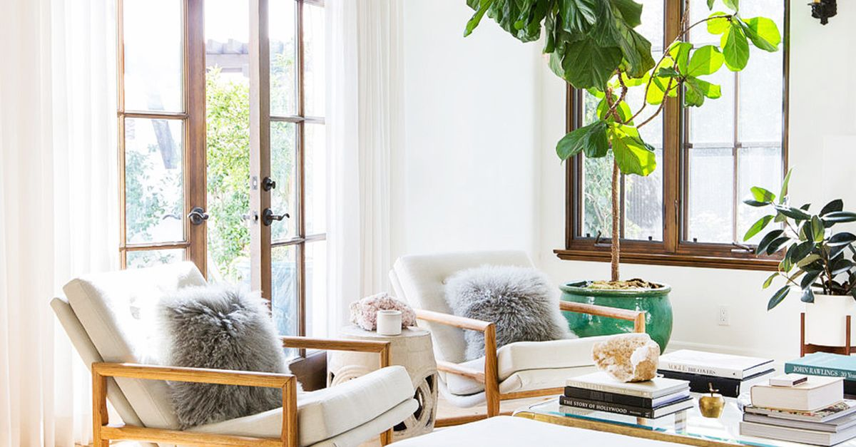 How to Decorate With Large Indoor Plants | MyDomaine AU