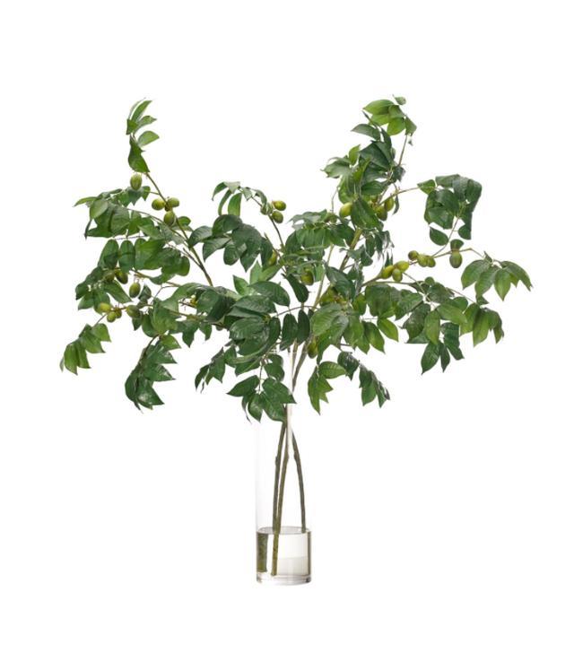 NDI Olive Branch