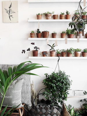 Seriously: You Can't Kill This Stylish Indoor Plant (It's Not a Succulent)
