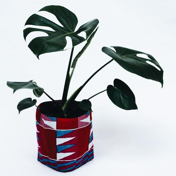 Leaf Supply Yevu  x Leaf Supply Pot Plant Covers + Monstera Deliciso