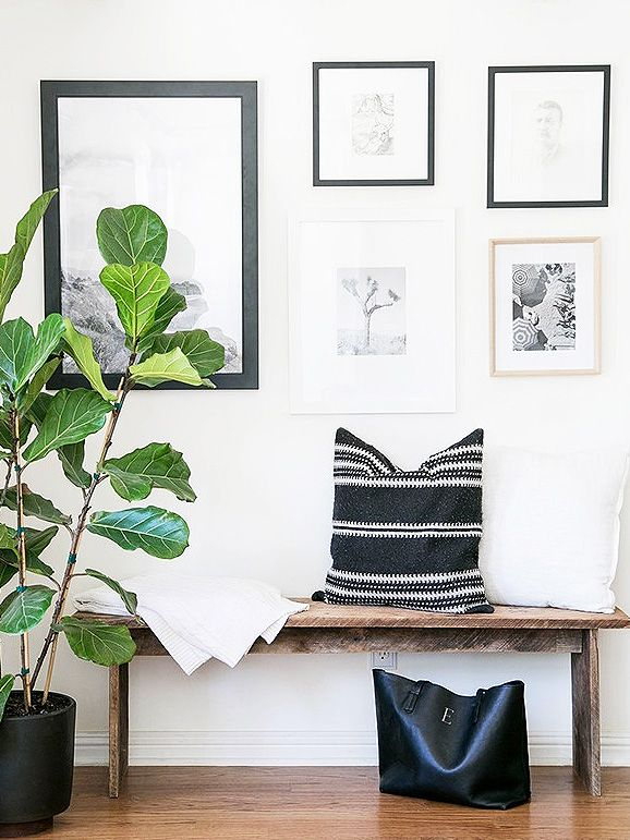 Where to Buy Fiddle Leaf Fig