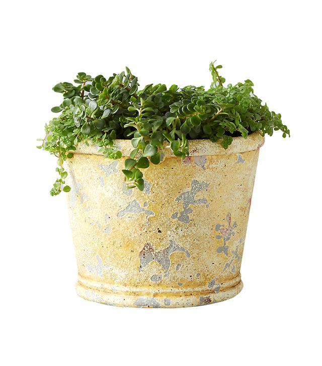 Terrain Barnacle Miniature Taper Pot