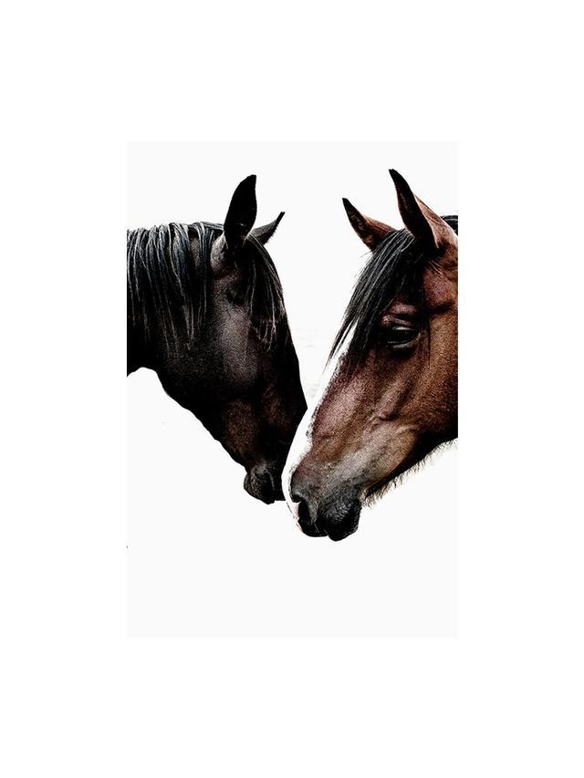 Kara Rosenlund Wild Horses Photographic Print