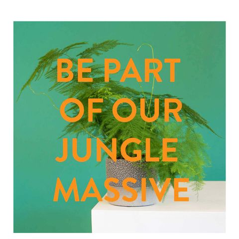 The Jungle Massive Subscription