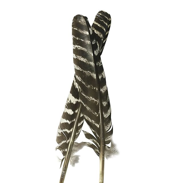 Grade A Barred Turkey Smudging Feather (no stains, cuts, pieces missing)