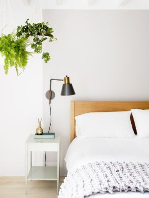 The Best Feng Shui Plants to Bring the Good Vibes Home