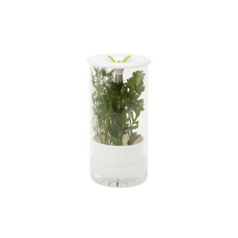 Glass Herb Preserver