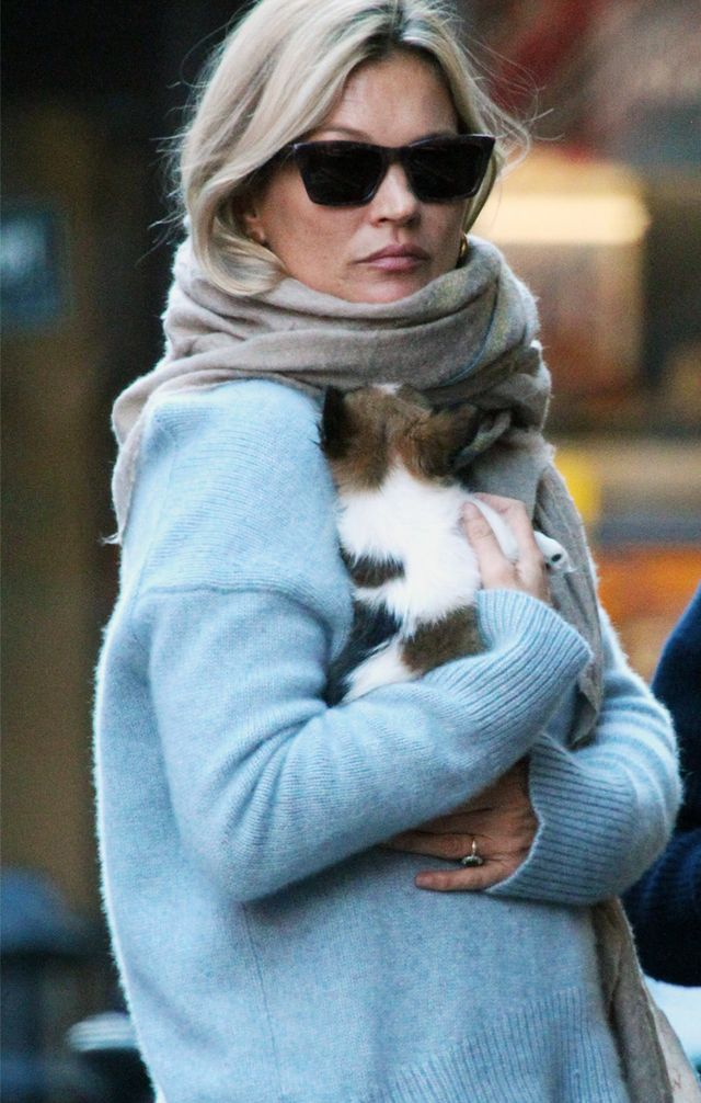Kate Moss wearing blue jumper with tiny puppy