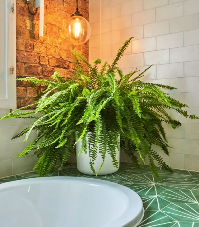 Air purifying plants byrdie uk for Best air purifying plants for bedroom