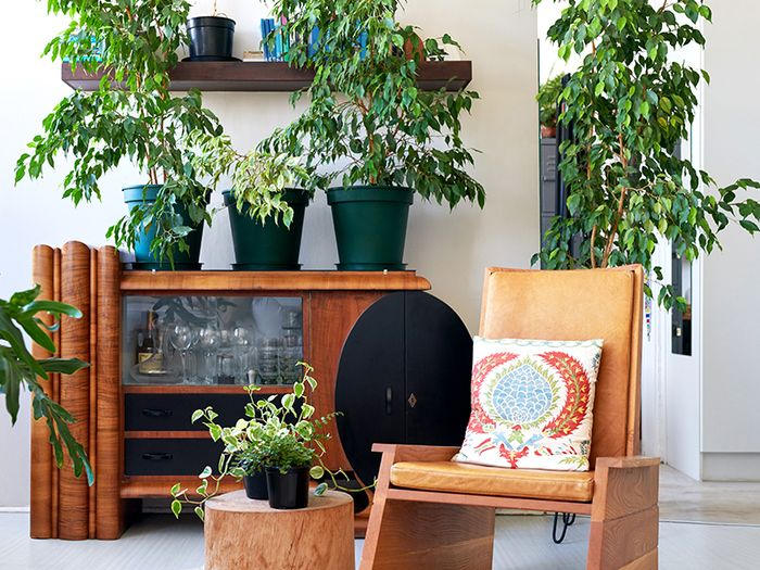 6 Health Benefits Of Indoor Plants Thethirty,Budget Friendly Home Bar Ideas On A Budget