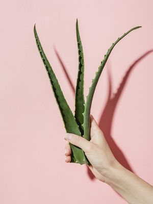 People Are Obsessed With Putting Aloe Vera in Hair—Here's Why