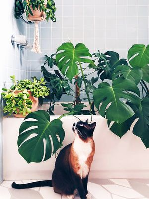 These 8 Indoor Plants Are Safe for Pets (and Will Spruce Up Your Space)