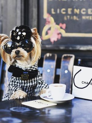 This #StreetStyleDog Probably Owns More Chanel Than You Do