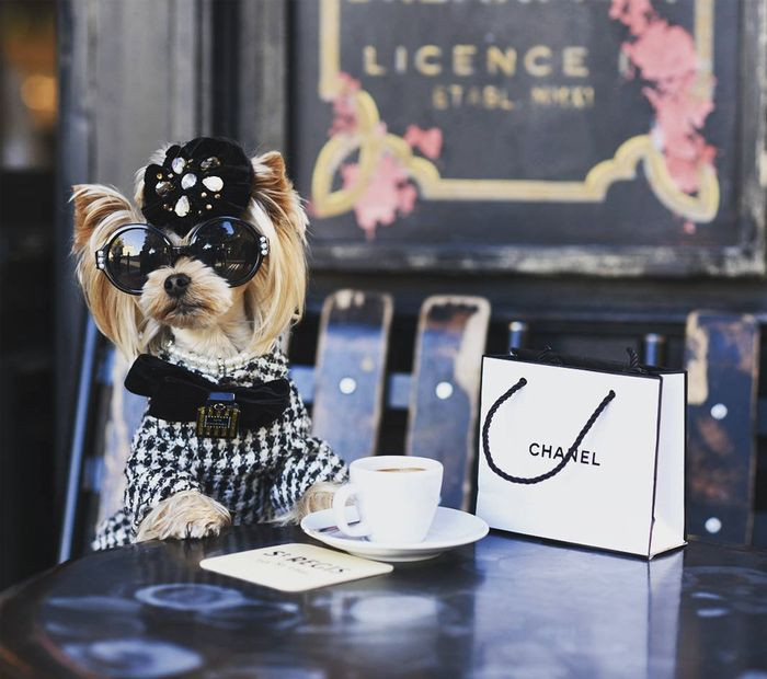 Little Lola Sunshine: the street style dog with a love for fashion